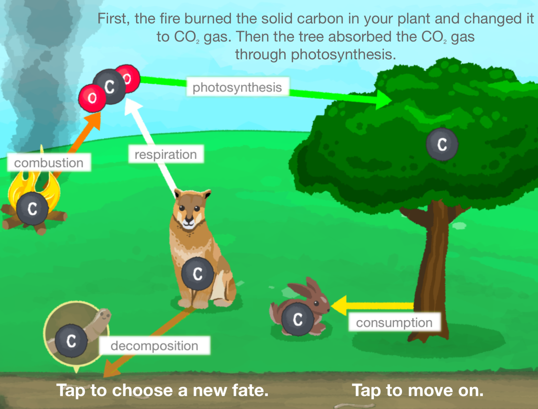 Cellenergy Photosynthesis Labs Review For Teachers Common Sense