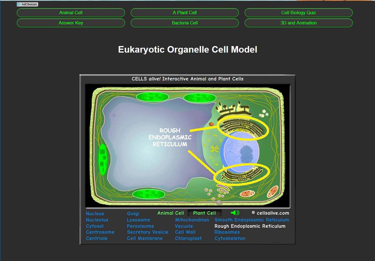 Eukaryotic Cell Cells Alive Michaelieclark Animal And Plant Diagram 3d Interactive Models Allow Students To Learn More About