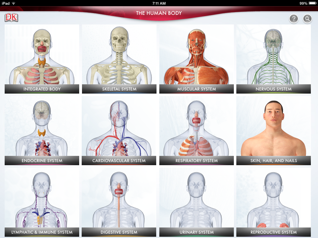 what are the twelve organ systems of the human body