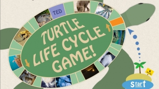 Teacher materials include files that can be printed for classroom use like this Turtle Life Cycle Game.