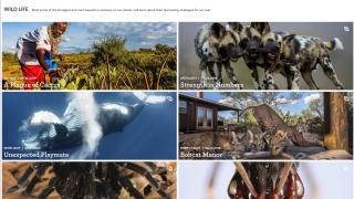 The Wild Life topic covers how different species adapt and survive in our changing climate.