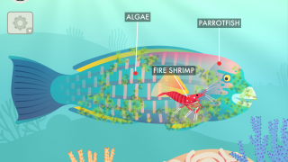 Help fire shrimp clean the algae off of a parrotfish.