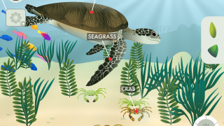 Plant seagrass, watch it grow, and enjoy the ecosystem that grows to surround it.