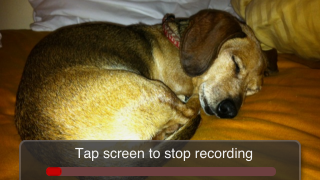 "Tap the red ""record"" button to add up to 5 minutes of original narrative to a photo.  The app's VU meter shows the audio input level (avoid getting into the red or audio will be distorted)."
