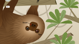 Kids will enjoy seeing how slowly a sloth moves.
