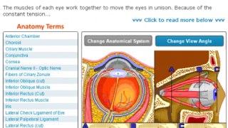 A change in viewing angle of muscles of the eye leads to less sophisticated graphics.