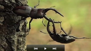 Video clips show fascinating insects behaviors.
