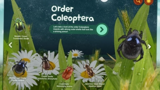 Kids can learn about five orders of insects.