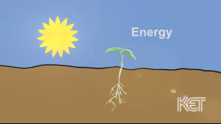 Animated video outlines show how plants grow.