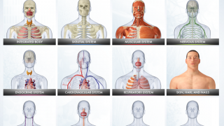Kids can learn about 12 body systems.