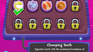 Each level is named after a structure of the digestive system.