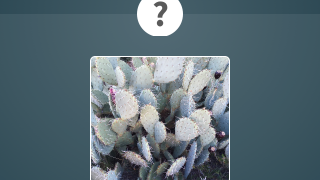 Take a photo of a plant and the app tries to match it to the iNaturalist database.