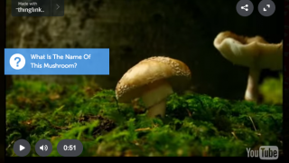 Create annotated videos with interactive pop-ups.