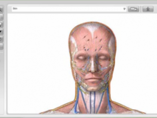 Dissectible Anatomy allows users to examine the body layer by layer.
