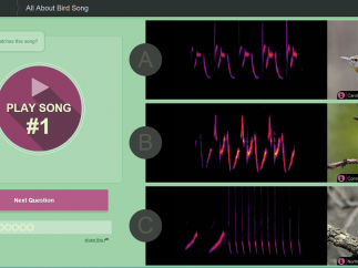 Helps kids visualize bird songs.