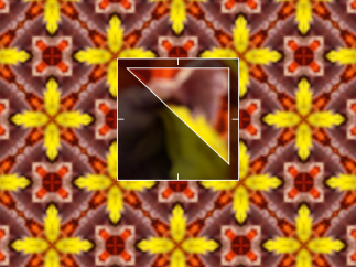 The pattern generator zooms in closely to images and creates a pattern.