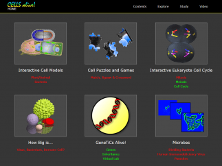 The site includes information, images, and activities about many kinds of cells.