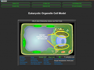 Interactive models allow students to learn more about cells.