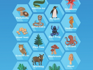 Given a category and several organisms, kids must classify the organisms.