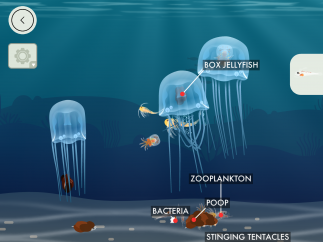 Box jellyfish eat various kinds of zooplankton and produce poop, which bacteria conveniently decompose.