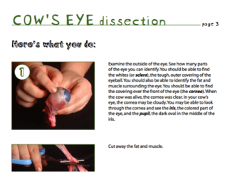 Activities section includes instructions for simple experiments that kids can view online or print out.