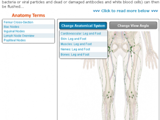 Use the Change Anatomical System tool to switch views to other systems in the same body region.