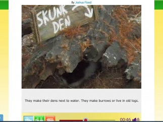 This sample tale shows a report about skunks.