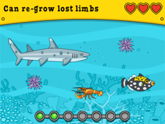 Find animals with specific features in common.