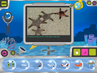 Kids see photos of and learn about real sea animals.
