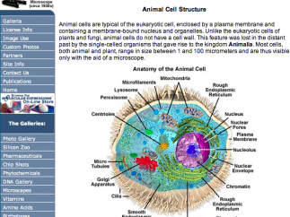 There's a section devoted to cells.