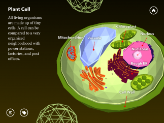 Dive into a plant cell and interact with all the organelles.