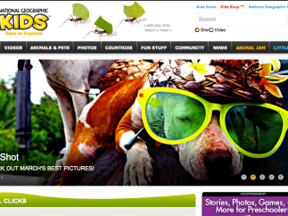 The main page is visually appealing and provides easy navigation to the various sections of the site.