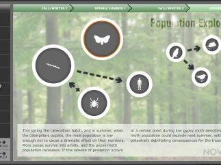 Check out how a large influx of acorns affects other populations.