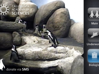 "A pre-recorded ""Biologist"" talk shows a live feeding and talk."
