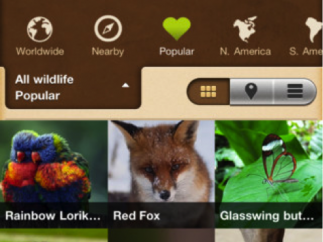 """A """"Field Guide"""" shows pictures submitted by Project Noah users."""