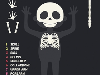 Kids learn names and locations of bones by completing a skeleton puzzle.