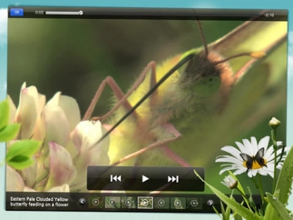 Video clips bring insects to life.