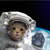 cat in an astronaut's uniform